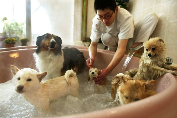 Tips Merawat Anjing